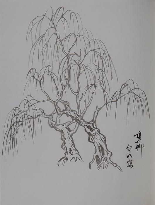 (6) 柳树